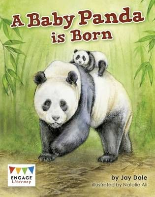 A Baby Panda is Born Badger Learning