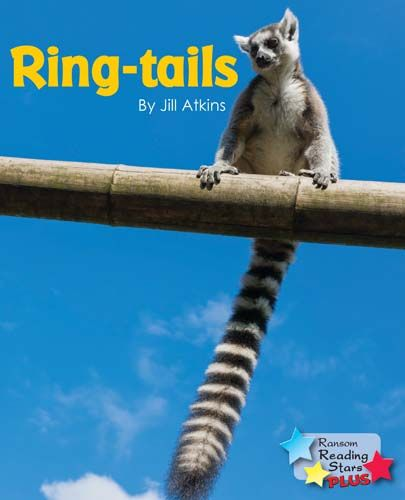 Ring-tails Badger Learning